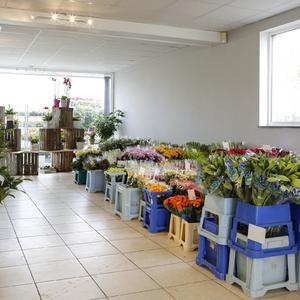 Go 4 flowers - Bloemen speciaalzaak